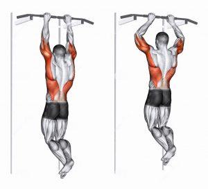 Подтягивания для мышц спины